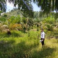 1 bidang tanah dengan total luas 13826 m2 di Kabupaten Bungo